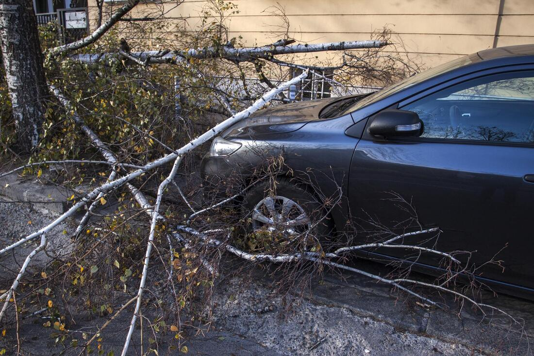 fallen tree on car waiting for emergency tree service