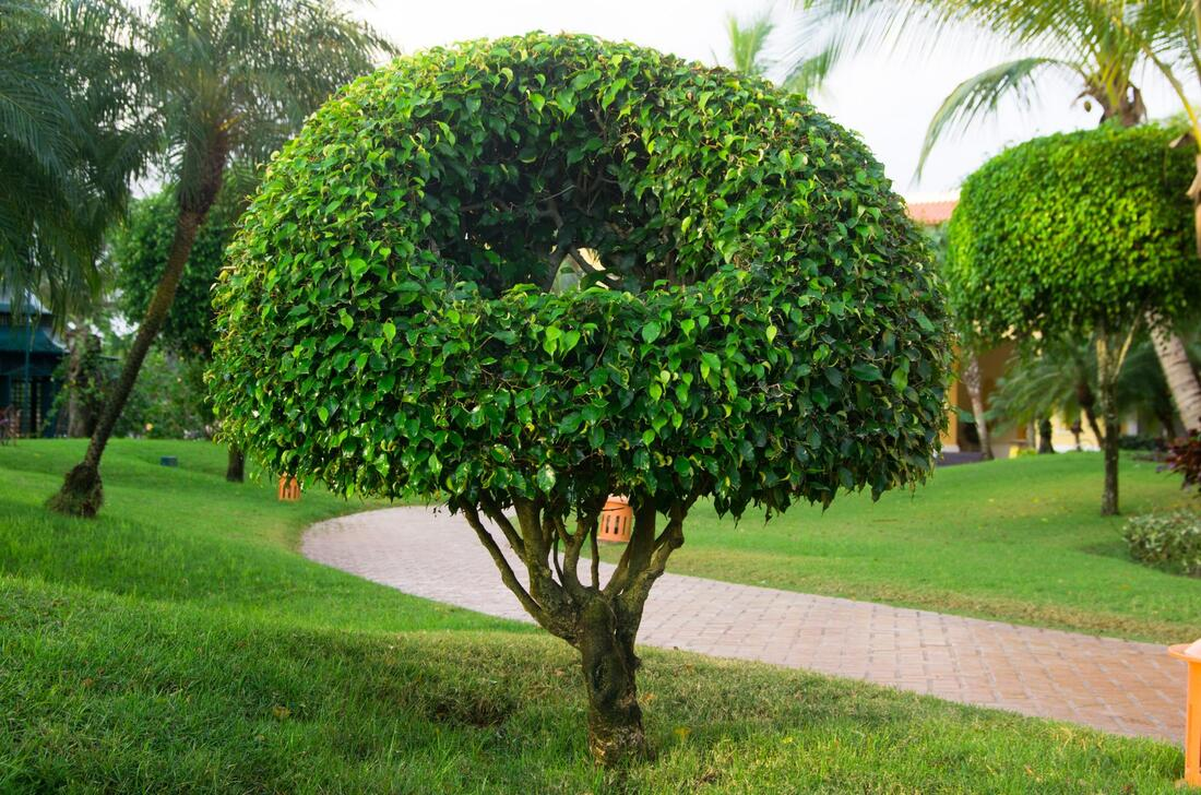 professional tree fertilization and planting service